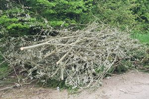 Pile of branches fly tipped